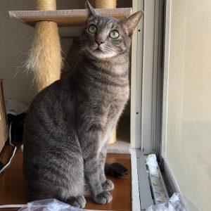猫は布団で丸くなる