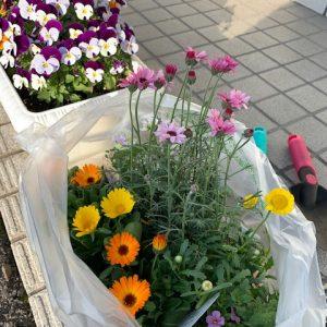 お花を植えました♪